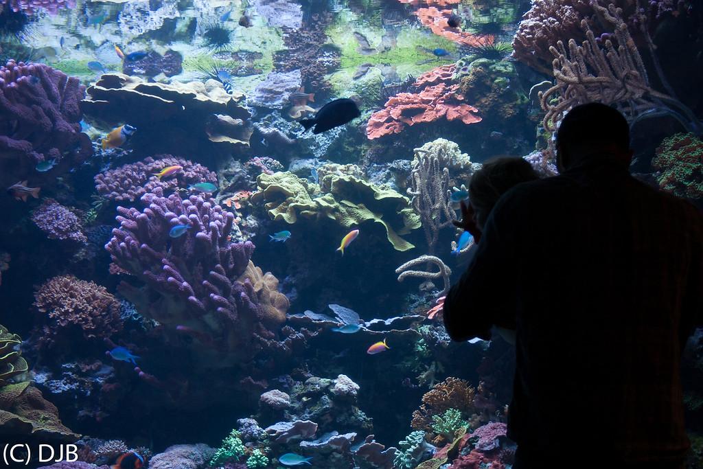 Aquarium of the Pacific, Long Beach, CA.
