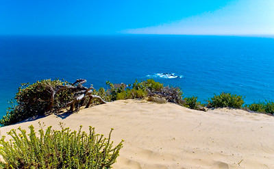 Dolphins play, I dream  Point Dume, Malibu, California