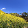 2019-04-16_Malibu_Solstice Canyon_18.JPG<br /> <br /> Five months after the devastating Woolsey fire in Malibu, the canyons are in bloom.
