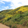 2019-04-16_Malibu_Solstice Canyon_16.JPG<br /> <br /> Five months after the devastating Woolsey fire in Malibu, the canyons are in bloom.