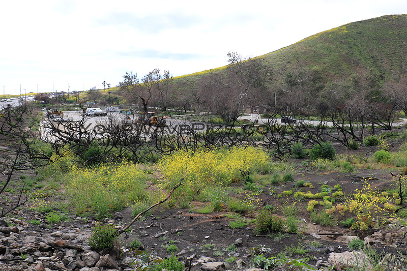 2019-04-16_Malibu_Leo Carrillo fire damage.JPG<br /> <br /> Heartbreaking to see the fire damage to the now-closed Leo Carrillo State Beach and campgroud