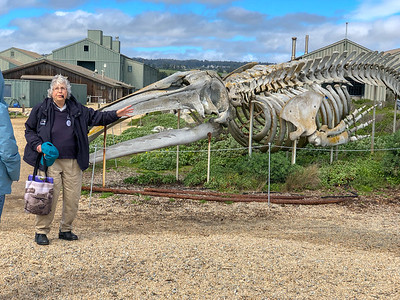 Our guide with grey whale skeleton