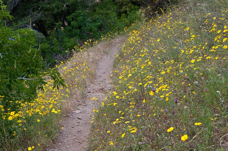 Hite trail