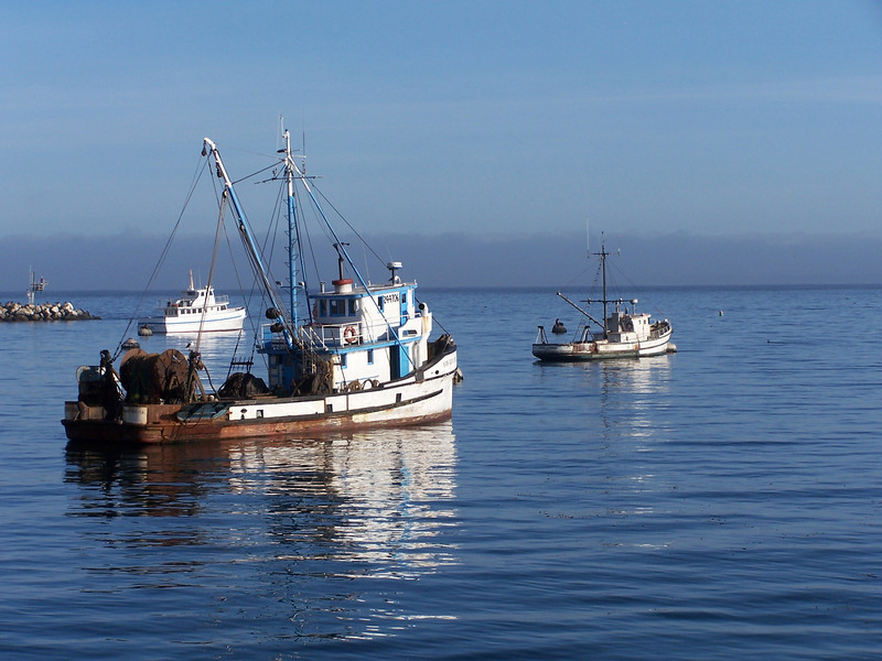 Fishing fleet heading out of Monterey Bay