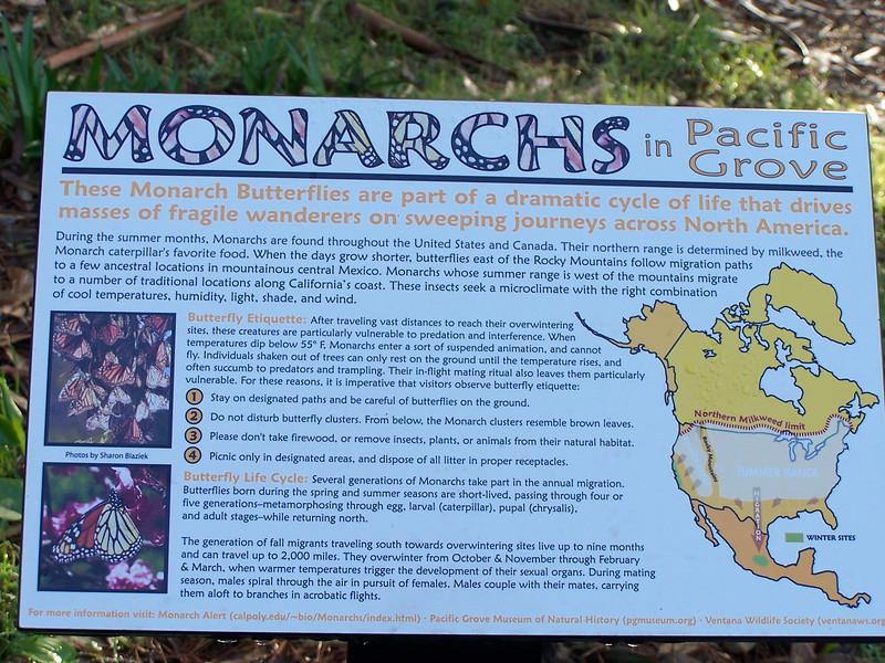 Monarch Sanctuary in Pacific Grove, CA