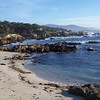 Harbor seals warming on the shore at Cypress Point Lookout
