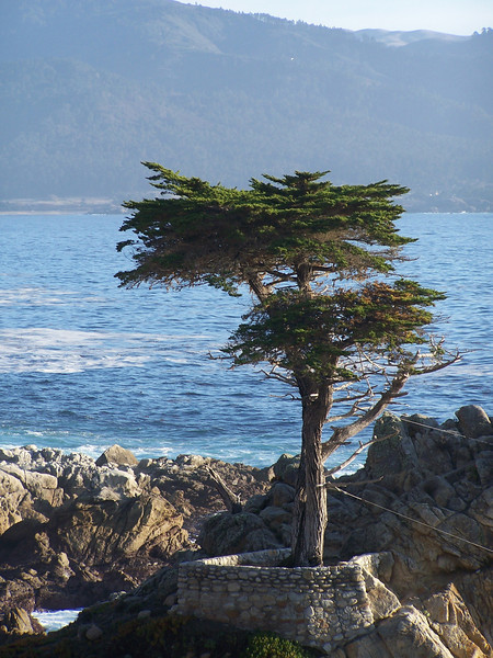 Probably the most famous tree in the United States, The Lone Cypress has clung to its rocky perch for over 250 years and serves as the symbol of Pebble Beach Company