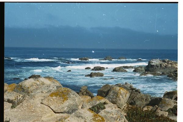 Along the 17 mile drive near Monterey, California.