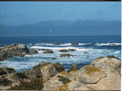 Along the 17 mile drive near Monterey, California.