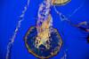 Monterey-Big Sur_20120508  005