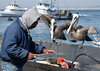 Monterey-Big Sur_20120508  020