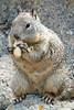 Pacific Grove Wildlife_2014-Aug  017
