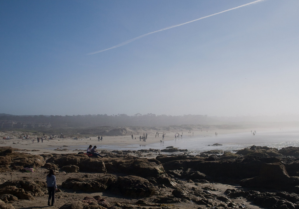 Asilomar State Beach, Pacific Grove, CA. Image Copyright 2010 by DJB.  All Rights Reserved.