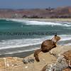 2487_2014-08-17_Morro Rock squirrel.JPG