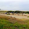 4260_Morro Strand State Campground_2015-08-18.JPG
