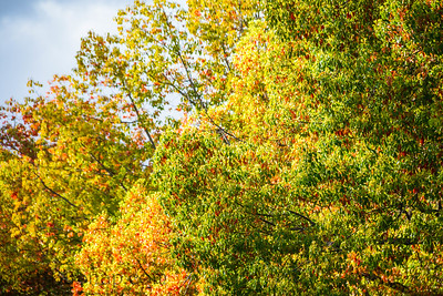 Trees with some colorful leaves