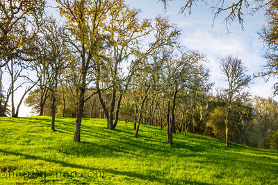 Spring Forest with Green Grass