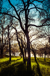 Lake side Trees in Evening Light