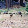 9074_Deer family.JPG