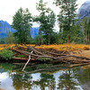 9103_Yosemite Reflections.JPG