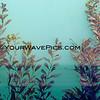 8810_Seaweed