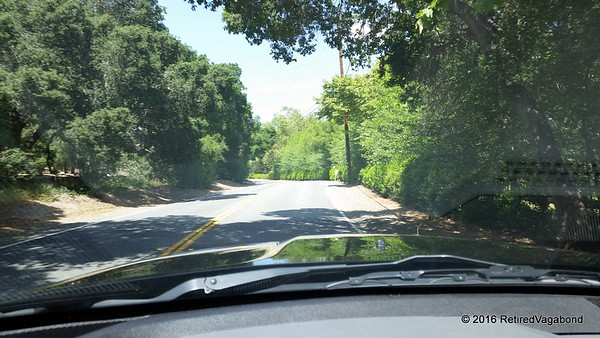 Traveling through the old oak trees