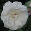 I Smelled a Rose For Louise Allred - Orange County Airport Hotel Terrace Drive  2-16-07