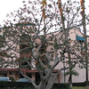 Pretty Tree in Front of Our Hotel - CA Hotel Architecture - Orange County Airport Hotel Terrace Drive  2-16-07