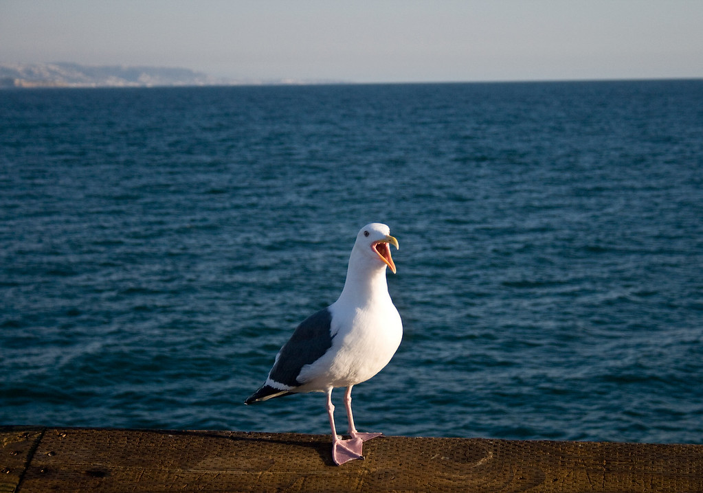 Balboa Island, CA.  Image Copyright 2009 by DJB.  All Rights Reserved.