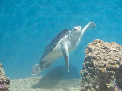 Monterey Bay Aquarium  Copyright 2011 Neil Stahl