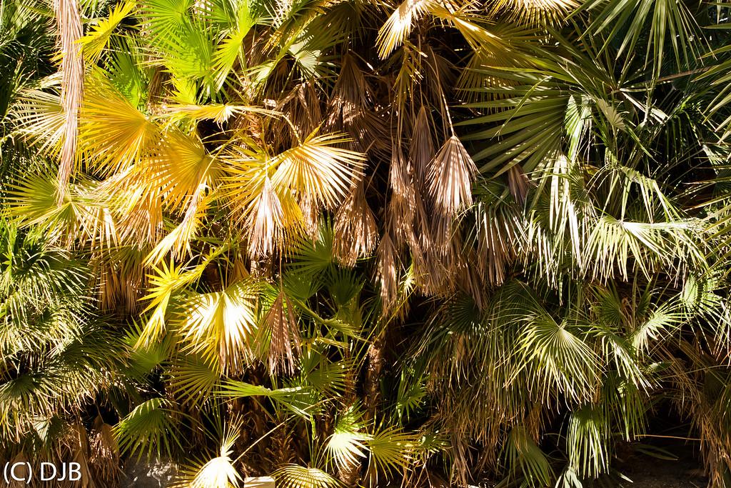 The Living Desert, Palm Desert, CA
