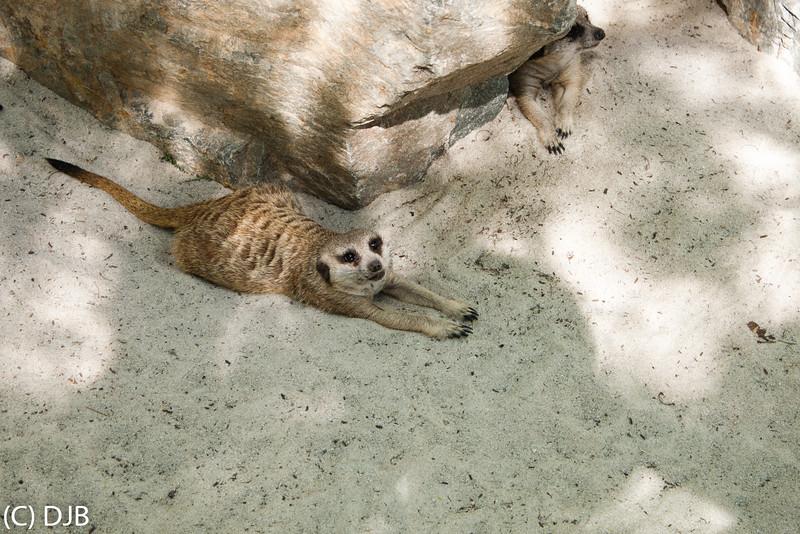 Meerkats, The Living Desert, Palm Desert, CA
