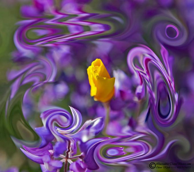 Poppy swirl