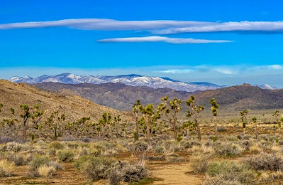 Joshua Trees and snow on the mountains...still very cold at 9am