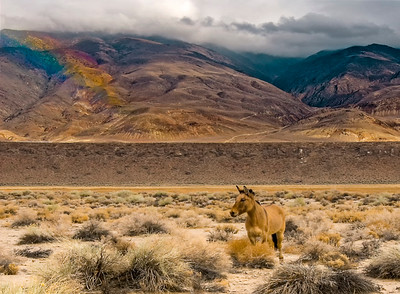 Horse and Rainbow 1
