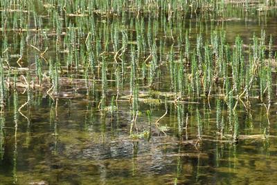 Twin Lakes-4