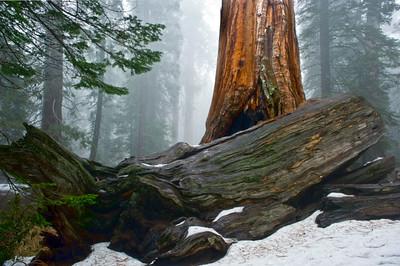 Sequoias44-Edit