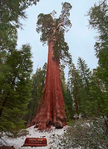 Sequoias_GenGrant01