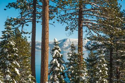 Tahoe Trees-17