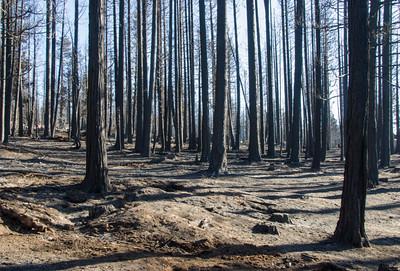 Fire 2007-32