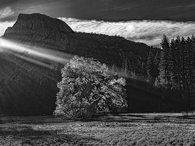 Sunrise in the meadow
