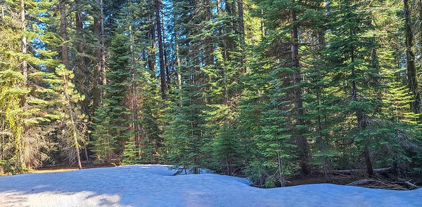 ...and on the ground at Mariposa Grove