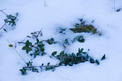 Yosemite_Snow-2