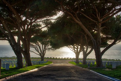 A Road through Trees in a National Cemetery