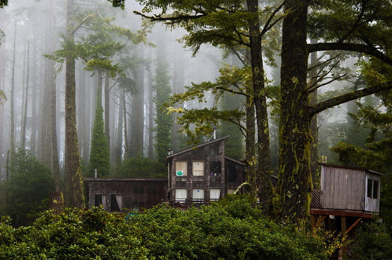Tree House in the Redwoods