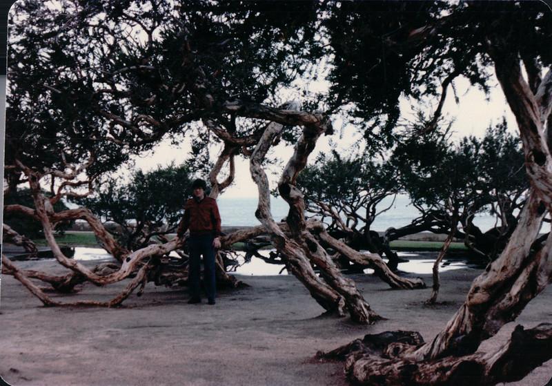 Unique Trees - La Jolla, CA - 1/30/86