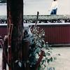 Koala - San Diego Zoo - San Diego, CA - 1/31/86