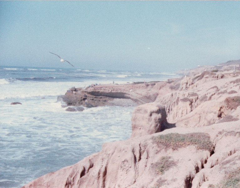 Seagulls - Unknown Location Around San Diego - 1/31/87