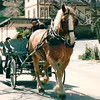 Horse-drawn Carriage - Julian, CA  4-3-96