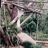 Play Area for Orangutans - San Diego Zoo - San Diego, CA - 1/31/86